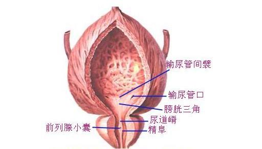 慢性膀胱炎症状表现有什么
